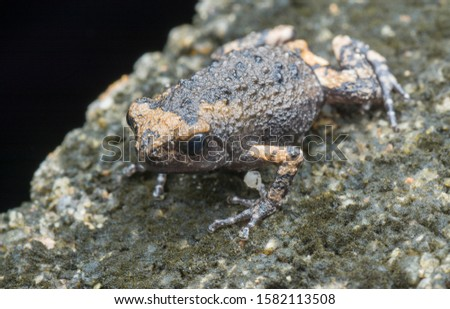 one baby toad on the concrete lap #1582113508