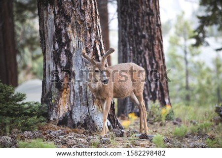 A beautiful shot of a brown deer in the forest #1582298482