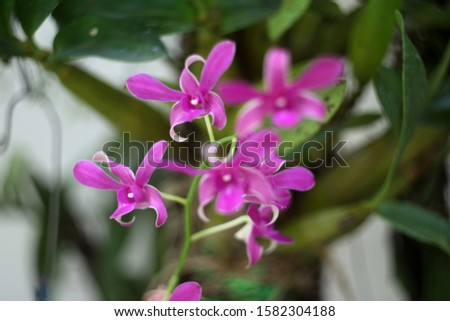 Purple orchids, purple orchids, Purple orchids, purple orchids #1582304188