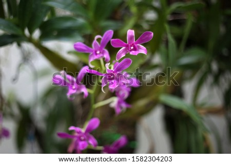 Purple orchids, purple orchids, Purple orchids, purple orchids #1582304203
