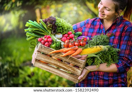 Farmer woman holding wooden box full of fresh raw vegetables. Basket with vegetable (cabbage, carrots, cucumbers, radish, corn, garlic and peppers) in the hands.  #1582392490