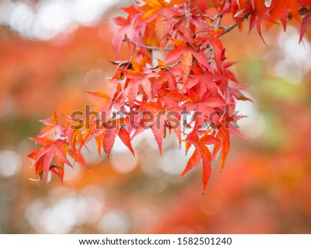 Beautiful autumn leaves in Japan #1582501240