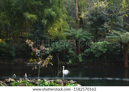 Detail of a pond in the Bussaco Forest in central Portugal #1582570162
