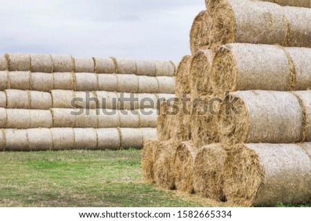 Folded hay on the field. Skird folded from pressed hay rolls #1582665334
