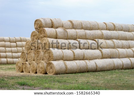 Folded hay on the field. Skird folded from pressed hay rolls #1582665340