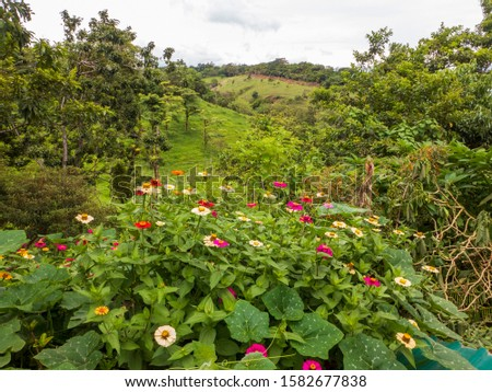 Hilly landscape in the north of Costa Rica with its lush vegetation #1582677838