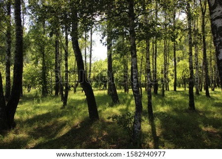 In the shadow of birch grove hot summer #1582940977