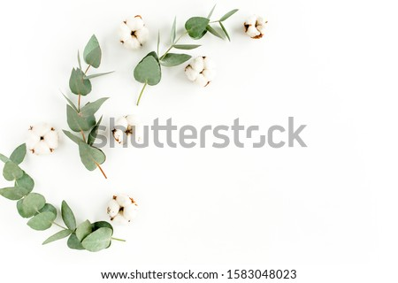 Green leaves eucalyptus and cotton isolated on white background. Flat lay, top view minimal concept border frame with empty place for text. #1583048023