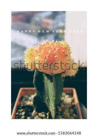 cactus New year greeting card #1583064148
