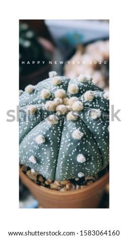 cactus New year greeting card #1583064160