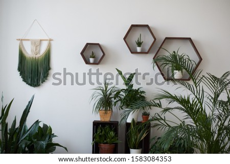 Modern loft living room with plywood wall and wooden floor, green tropical fern plants in pots near low sill window. Mock up interior photo simple urban jungle #1583084353