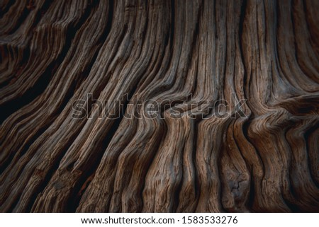 Wood surface. Wood texture. Texture of the old wood close-up. #1583533276