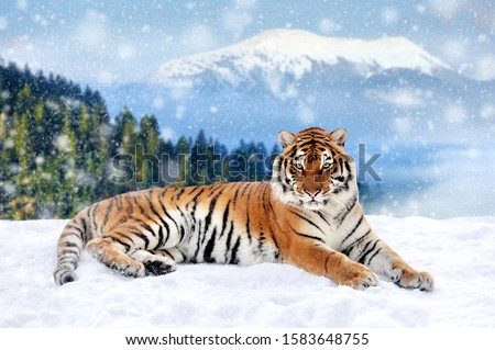 Tiger in a snow on winter background. New Year card #1583648755