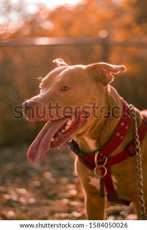 sun bathed dog pictures for your project