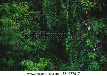 green tropical jungle forest background  #1584077617