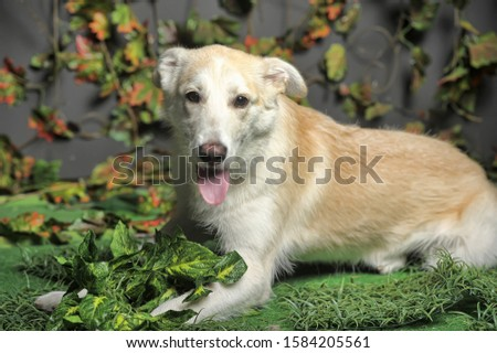 happy beige with a white dog cur on the background of grass and leaves #1584205561