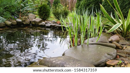 Beautiful small garden pond with stone shores and many decorative evergreens spring after rain. Selective focus. Nature concept for design #1584317359
