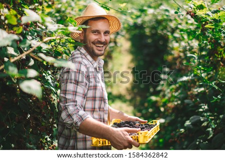 Portrait of a smiling farmer. Farmer harvesting blackberries on the field.  Royalty-Free Stock Photo #1584362842