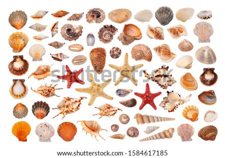 Clipart sea shells of different types  on white background #1584617185