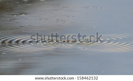 Moth Water Ripples - Nature Backgrounds of Interesting Beauty - Motion of Wonderful Earth #158462132
