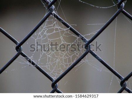 A Wet Spider Web Among the Links of a Chain Link Fence #1584629317