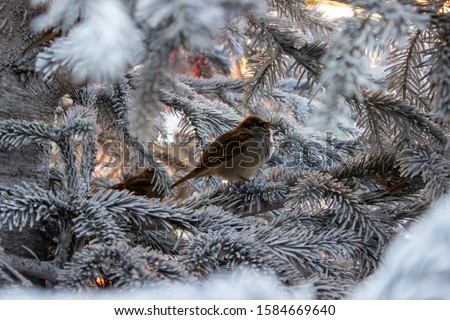 Bird on top of the branches of a white christmas tree full of snow