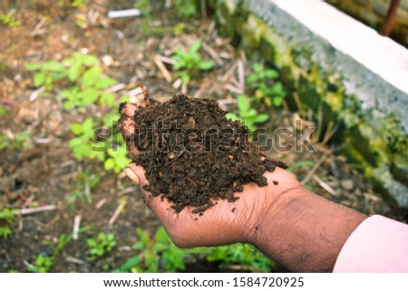 Farmer holding pile of vermicompost. Male agronomist showing compost manure. Can be use as fertilizer to accelerate the growth of plant in organic farming. Organic farming concept. agriculture backgro #1584720925