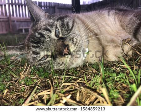 Pretty cat with pretty blue eyes. #1584859213