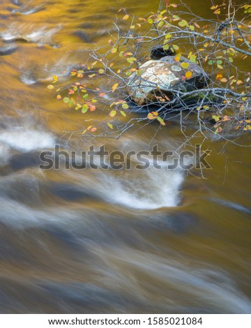 Warm light reflecting off of autumn foliage is reflected in the Manitowish River in northern Wisconsin, USA. #1585021084