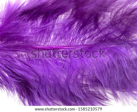 lilac fluffy feather as background #1585210579