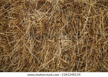 straw, dry straw, hay straw yellow background, hay straw texture #1585248154