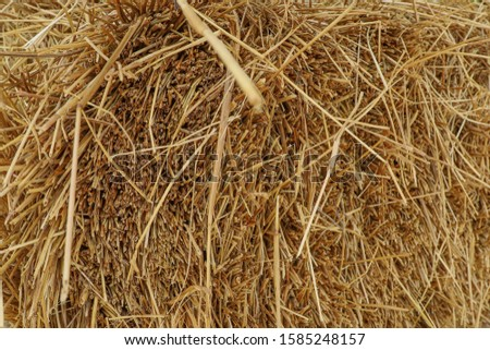 straw, dry straw, hay straw yellow background, hay straw texture #1585248157