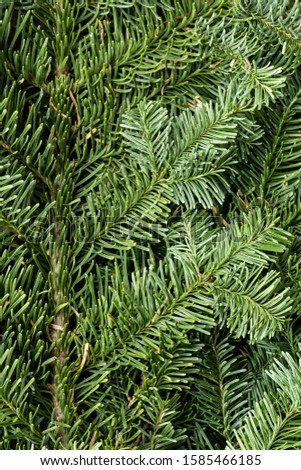 Spruce branch. Fir branch. A branch of an evergreen tree. Christmas background. New year background. Coniferous branches. Texture of coniferous branches. #1585466185