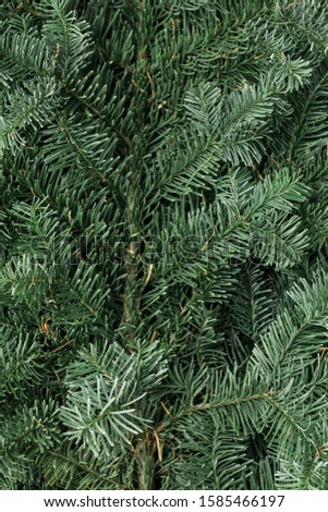 Spruce branch. Fir branch. A branch of an evergreen tree. Christmas background. New year background. Coniferous branches. Texture of coniferous branches. #1585466197