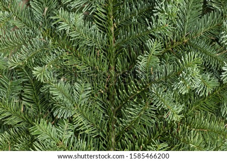 Spruce branch. Fir branch. A branch of an evergreen tree. Christmas background. New year background. Coniferous branches. Texture of coniferous branches. #1585466200