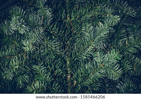 Spruce branch. Fir branch. A branch of an evergreen tree. Christmas background. New year background. Coniferous branches. Texture of coniferous branches. #1585466206