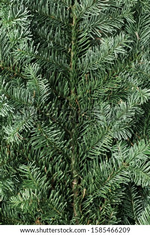 Spruce branch. Fir branch. A branch of an evergreen tree. Christmas background. New year background. Coniferous branches. Texture of coniferous branches. #1585466209