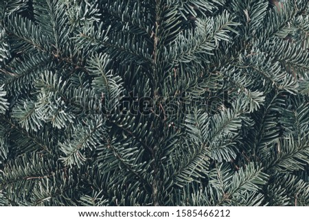 Spruce branch. Fir branch. A branch of an evergreen tree. Christmas background. New year background. Coniferous branches. Texture of coniferous branches. #1585466212