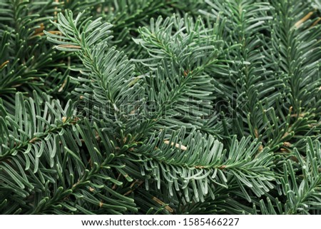 Spruce branch. Fir branch. A branch of an evergreen tree. Christmas background. New year background. Coniferous branches. Texture of coniferous branches. #1585466227