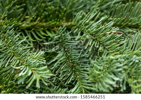 Spruce branch. Fir branch. A branch of an evergreen tree. Christmas background. New year background. Coniferous branches. Texture of coniferous branches. #1585466251