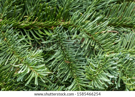 Spruce branch. Fir branch. A branch of an evergreen tree. Christmas background. New year background. Coniferous branches. Texture of coniferous branches. #1585466254
