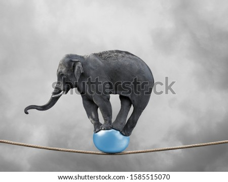 Gray circus elephant balancing on a ball with rope with cloudy sky #1585515070