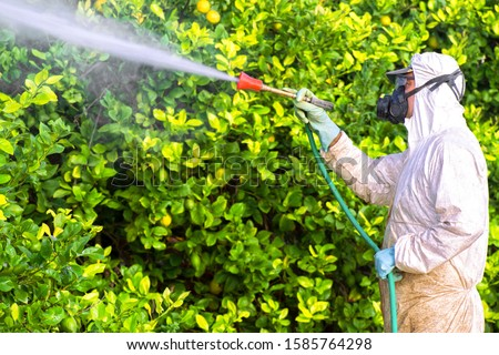 Weed insecticide fumigation. Organic ecological agriculture. Spray pesticides, pesticide on fruit lemon in growing agricultural plantation, spain. Man spraying or fumigating pesti, pest control #1585764298