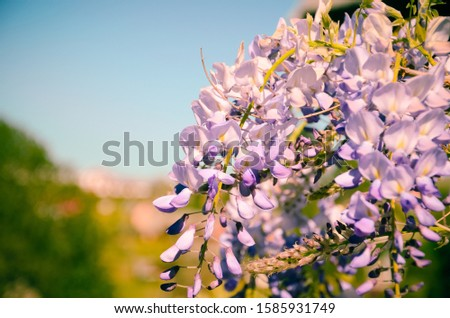 A closeup view of the butterfly bushes blossom under a blue sunny sky during daytime #1585931749