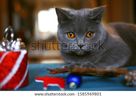 grey cat with Christmas toys