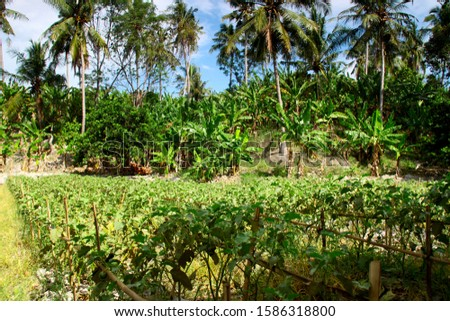 garden with lush plants there are eggplant trees and many banana trees and so forth #1586318800