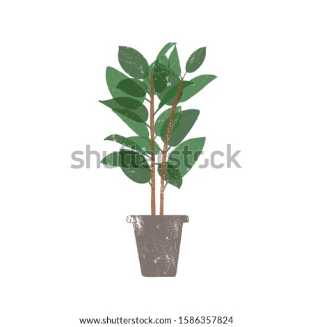 Rubber plant in ceramic pot flat vector illustration. Ficus, trendy potted evergreen houseplant isolated on white background. Indoor flower, domestic decorative greenery. Rubber bush design element. #1586357824