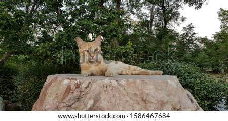 A tabby ginger cat resting outdoors on a standing stone platform #1586467684