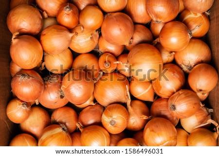 Fresh onions. Onions background. Ripe onions. Onions in market #1586496031