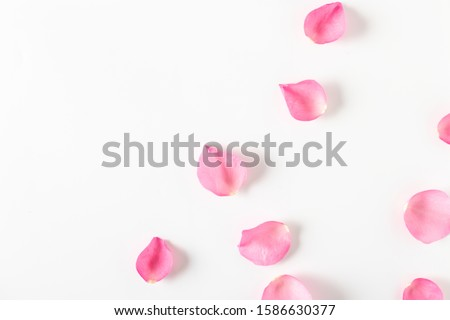 Top view of pink rose petals on white background.Valentine's day concept. Royalty-Free Stock Photo #1586630377